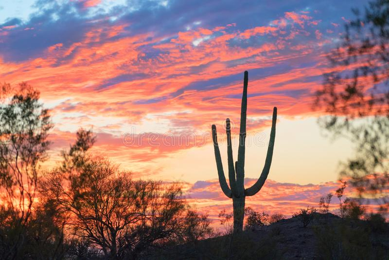 Tramonto e cactus del saguaro in Arizona immagine stock libera da diritti
