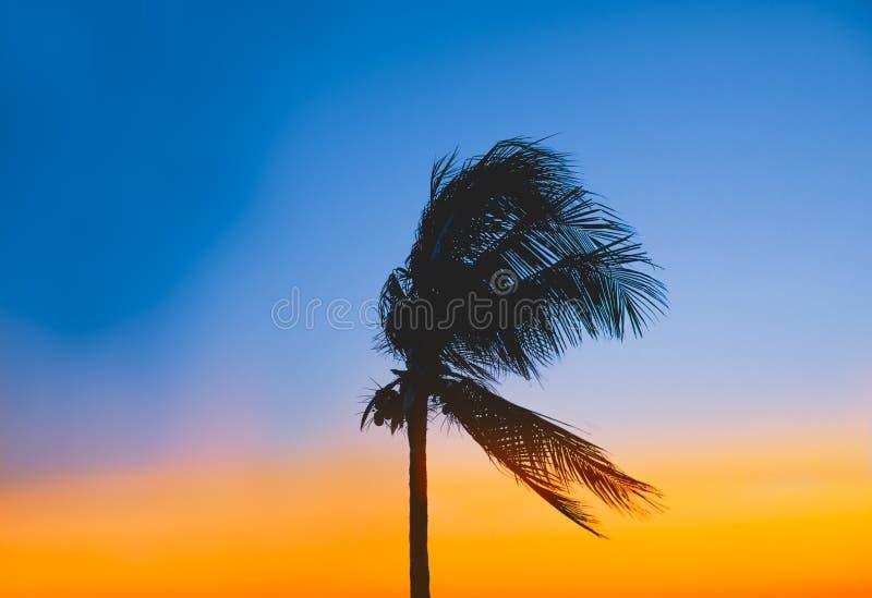 Tramonto e una bella palma fotografie stock libere da diritti