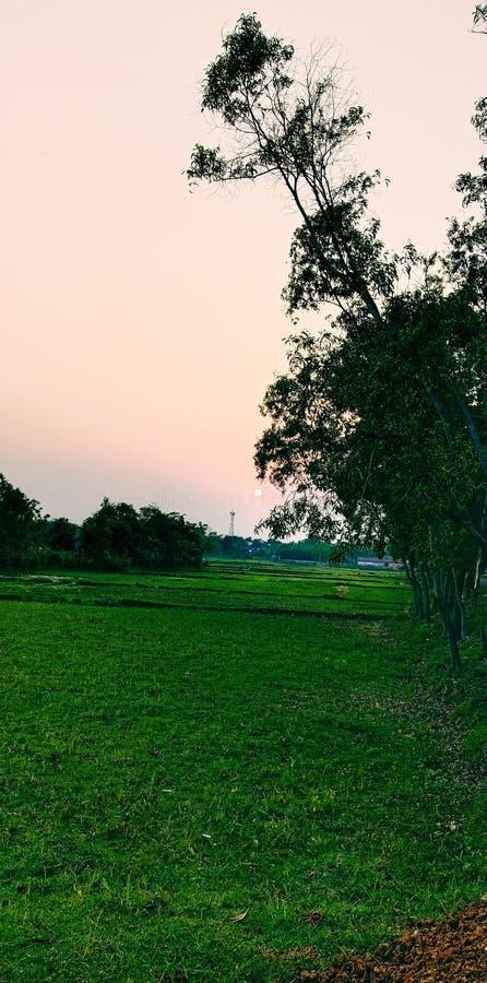Tramonto e vista vistosa del paesaggio con fondo verde fotografia stock