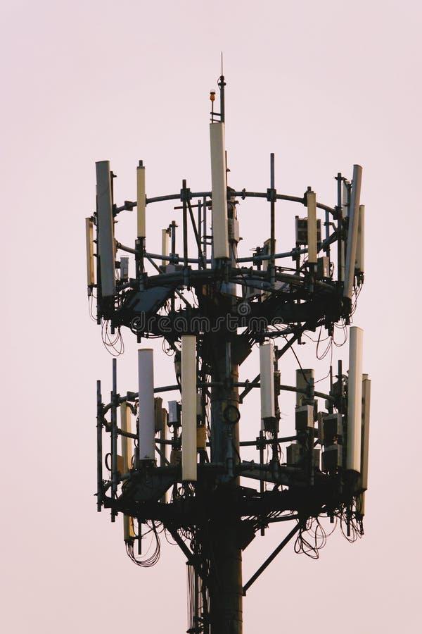 Tramonto ed albero alto con l'antenna cellulare immagini stock libere da diritti
