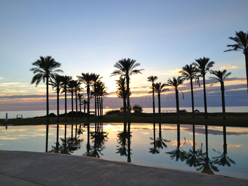 Tramonto fra le palme e il mare in una sera dorata. Le luci delicate del tramonto, l'acqua, il cielo e il mare: un'immagine che assomiglia al paradiso stock image