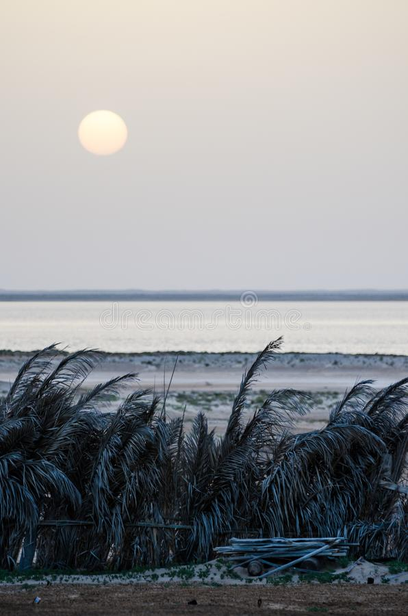 Tramonto grigio sopra l'Oceano Atlantico e la barriera di foglia di palma scura nel parco nazionale di Arguin del ` del seggio d, immagini stock libere da diritti
