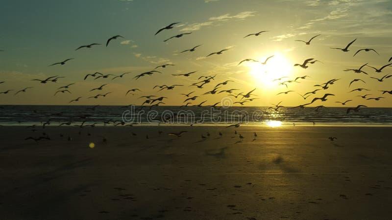 Tramonto il Belucistan della spiaggia di Gwadar immagine stock libera da diritti