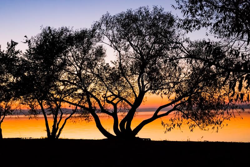 Tramonto incredibile e luminoso sopra l'acqua contro lo sfondo di cui la siluetta di grande albero fotografie stock