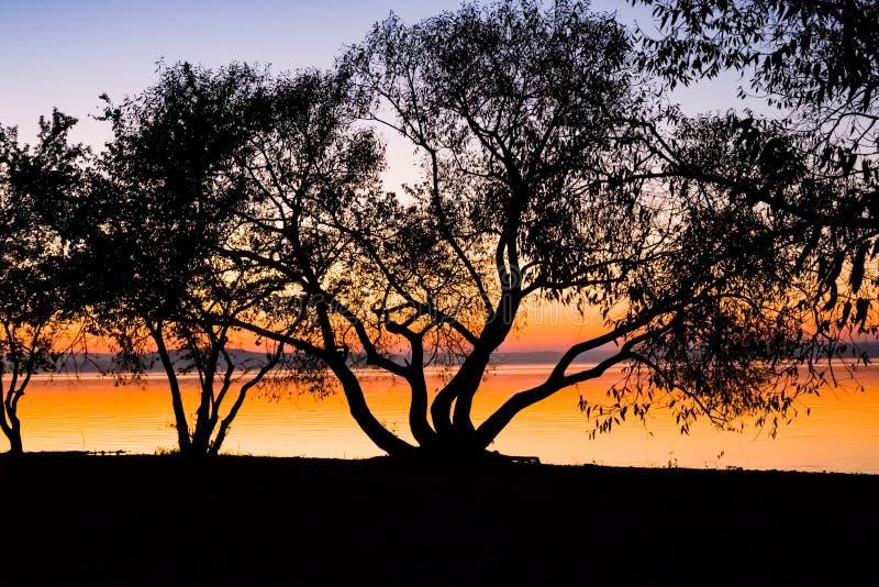 Tramonto incredibile e luminoso sopra l'acqua contro lo sfondo di cui la siluetta di grande albero fotografia stock libera da diritti