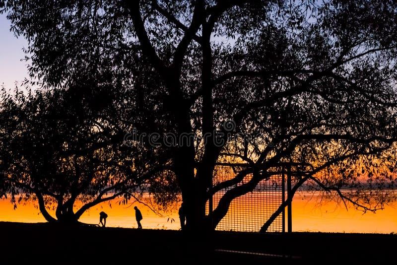 Tramonto incredibile e luminoso sopra l'acqua contro lo sfondo di cui la siluetta di grande albero fotografie stock libere da diritti