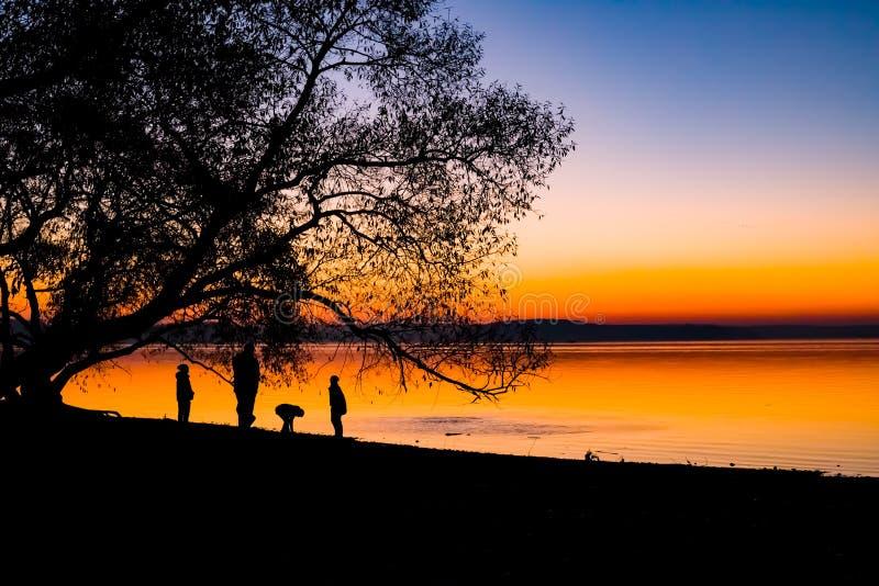 Tramonto incredibile e luminoso sopra l'acqua contro lo sfondo di cui la siluetta di grande albero immagine stock