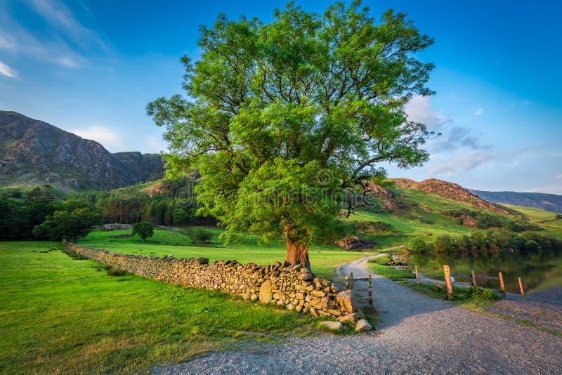 Tramonto meraviglioso con il grande albero sul prato, lago district fotografia stock libera da diritti