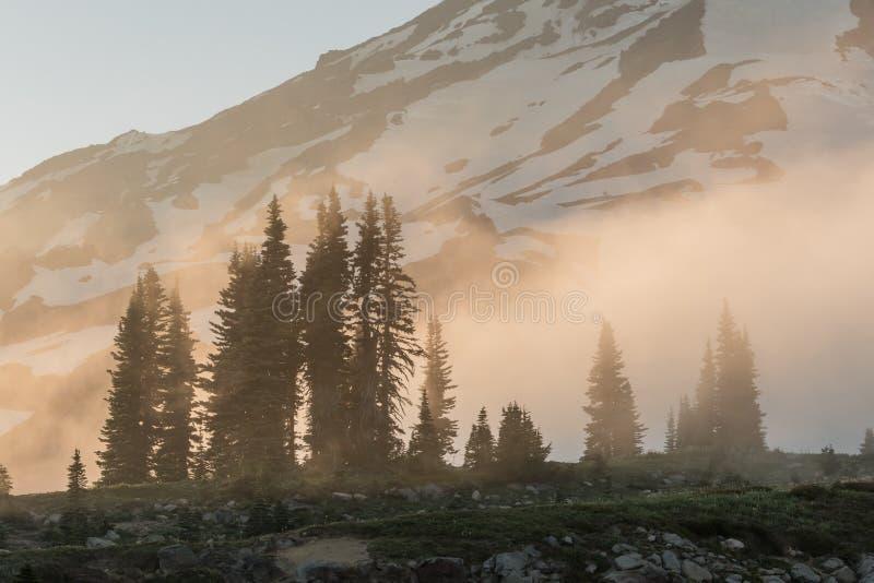 Tramonto nebbioso sopra i pini immagine stock