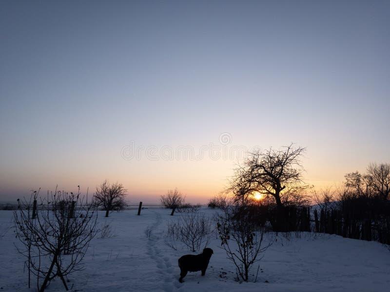 Tramonto nell'inverno ed in cane nero fotografia stock