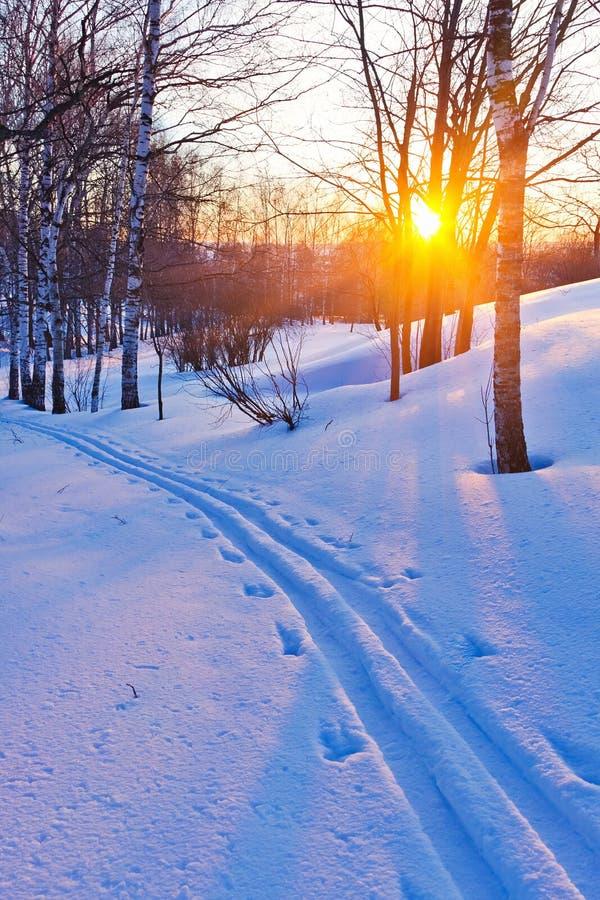 Tramonto nella foresta di inverno