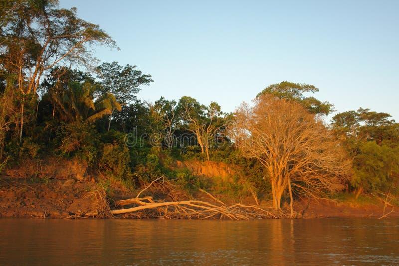 Tramonto nella giungla di Puerto Maldonado fotografia stock
