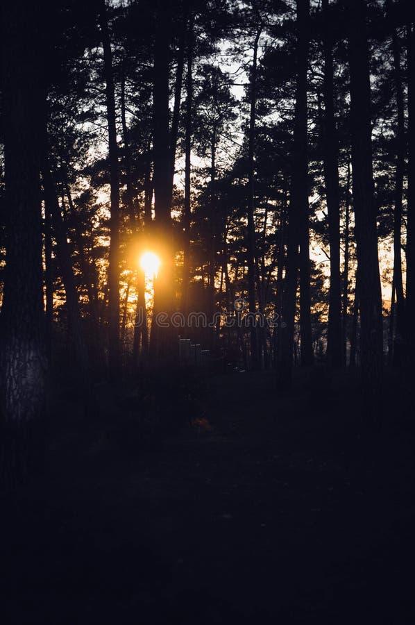 Tramonto nella siluetta dell'albero forestale immagine stock