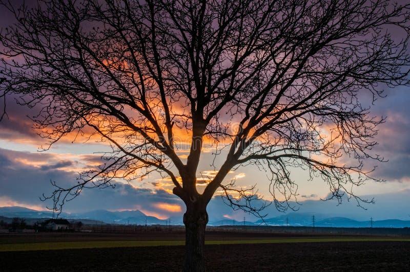 Tramonto nuvoloso con la siluetta da un albero fotografia stock libera da diritti