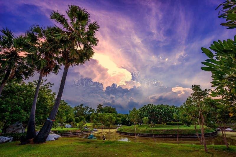 Tramonto in parco con le palme e il sawamp, erba verde immagine stock