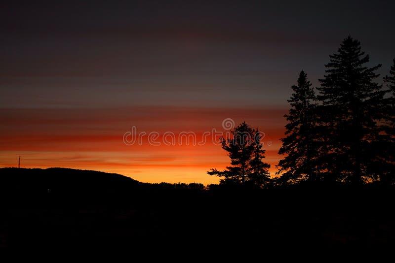 Tramonto rosso scuro con il silouhette degli alberi del cono del pino fotografia stock