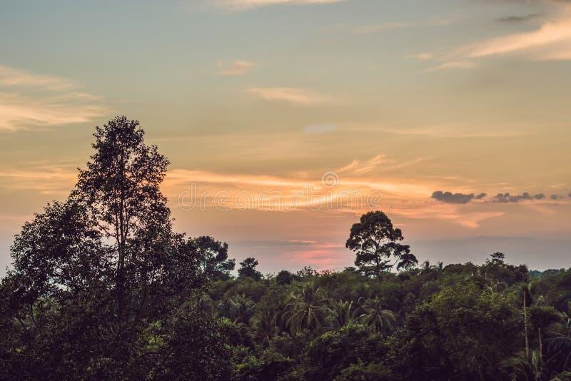 Tramonto rosso sopra la foresta pluviale immagine stock libera da diritti