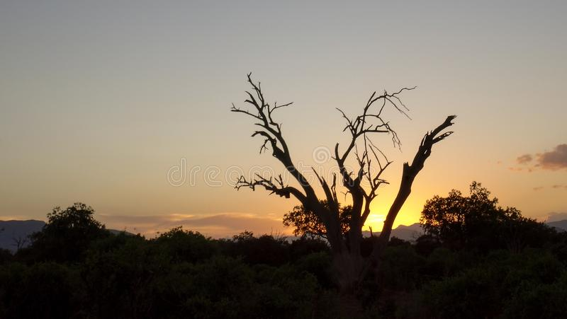 Tramonto in savanna di estate africana fotografia stock