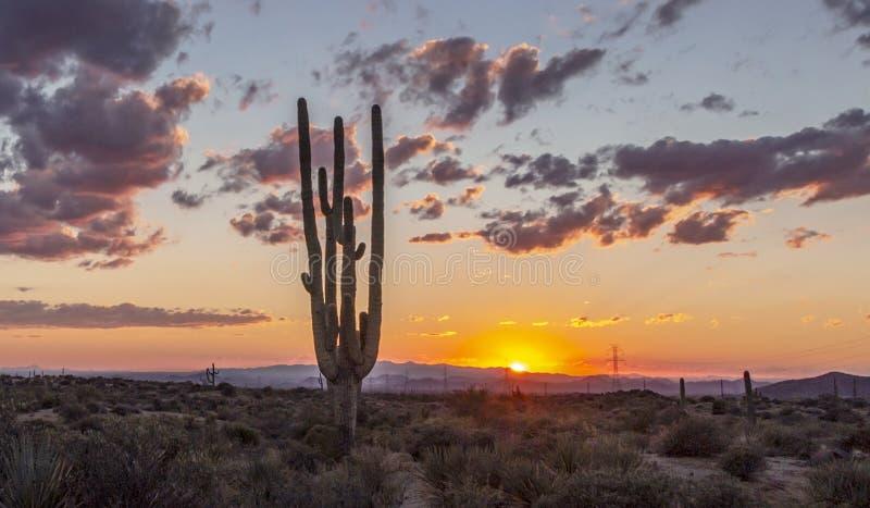 Tramonto solo del deserto del cactus con le linee elettriche immagine stock libera da diritti