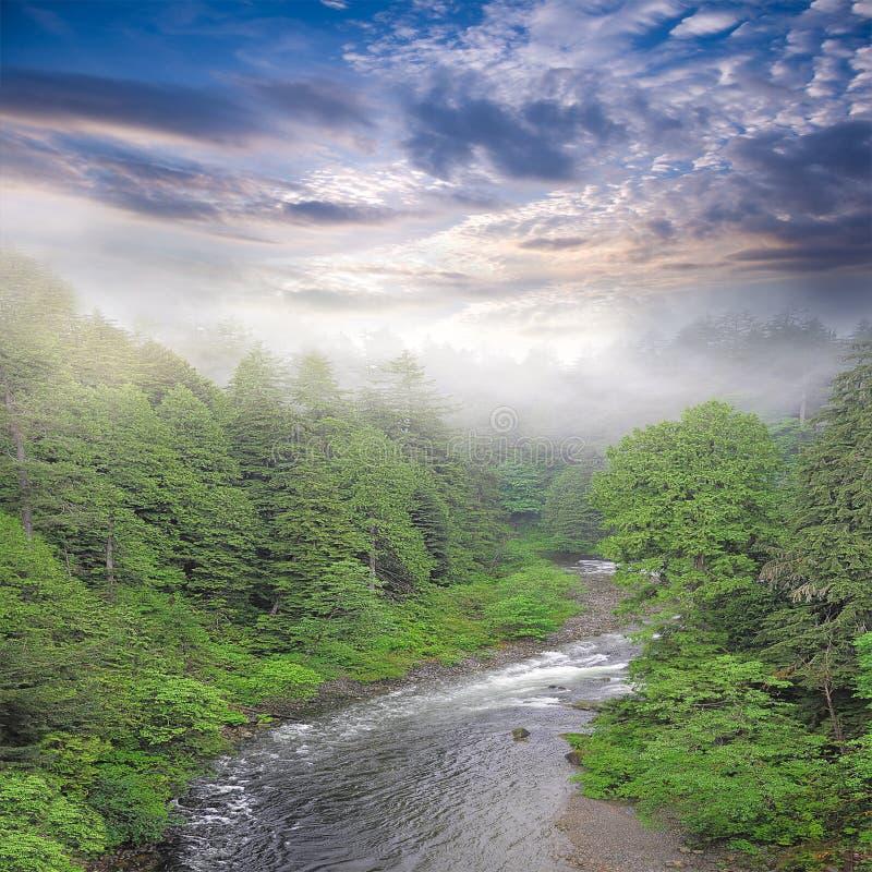 Tramonto sopra il fiume in foresta profonda fotografia stock