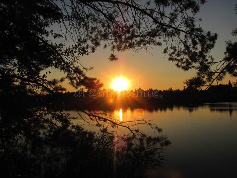 Tramonto sopra il lago all'interno dei rami del pino immagine stock
