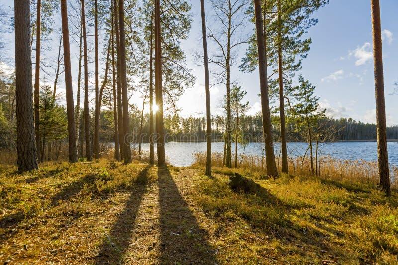 Tramonto sopra il lago nel legno fotografie stock