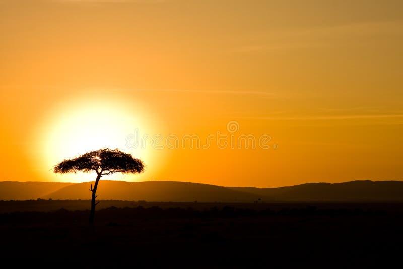 Tramonto sopra il Masai Mara fotografia stock libera da diritti