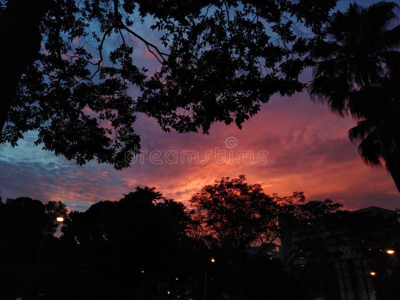Tramonto sopra il parco naturale di Bukit Batok immagine stock libera da diritti
