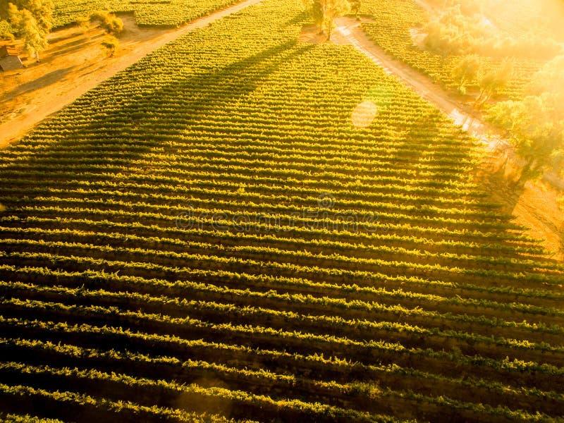 Tramonto sopra la vigna cilena paesaggio Siluetta dell'uomo Cowering di affari fotografie stock libere da diritti