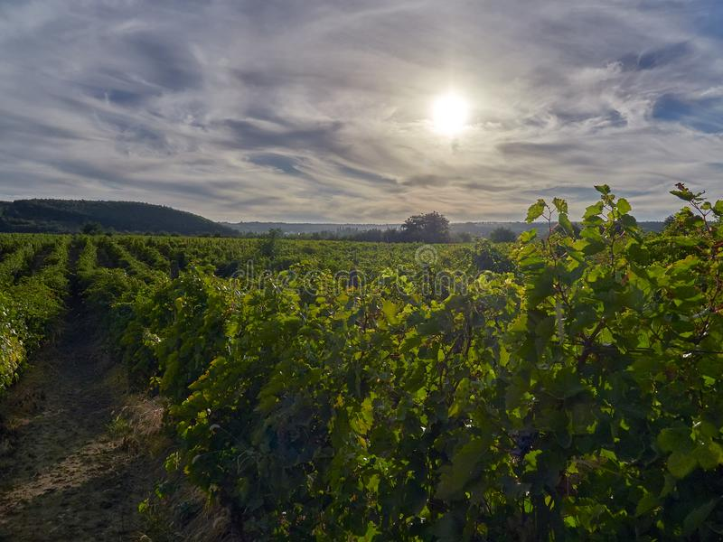 Tramonto sopra le vigne in Vrancea, vicino a Focsani, la Romania, immagini stock