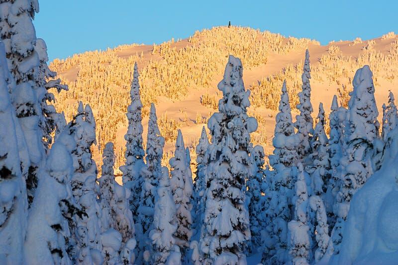Tramonto su neve fotografia stock libera da diritti