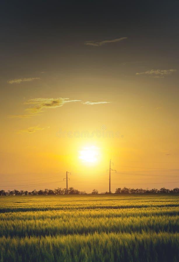 Tramonto su un giacimento di grano verde con le linee elettriche fotografia stock