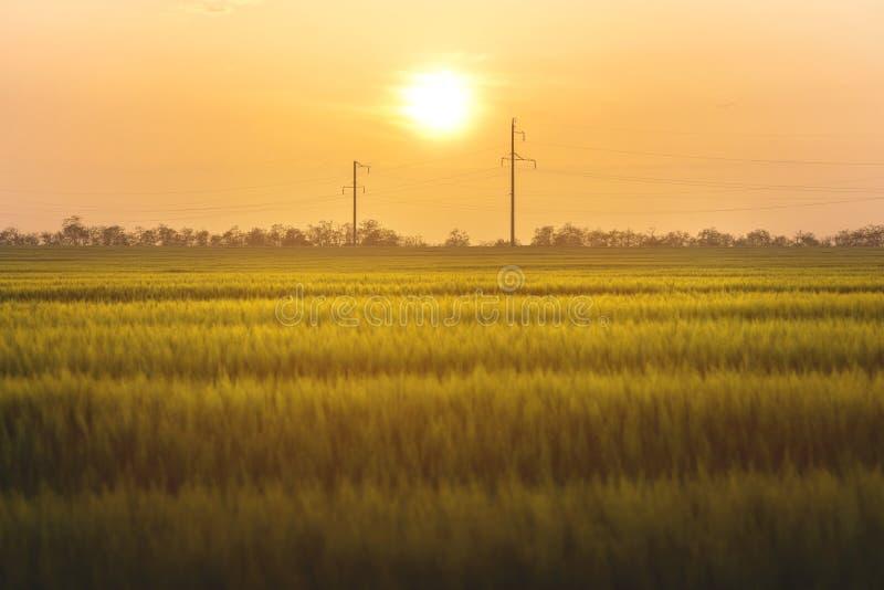 Tramonto su un giacimento di grano verde con le linee elettriche fotografie stock libere da diritti