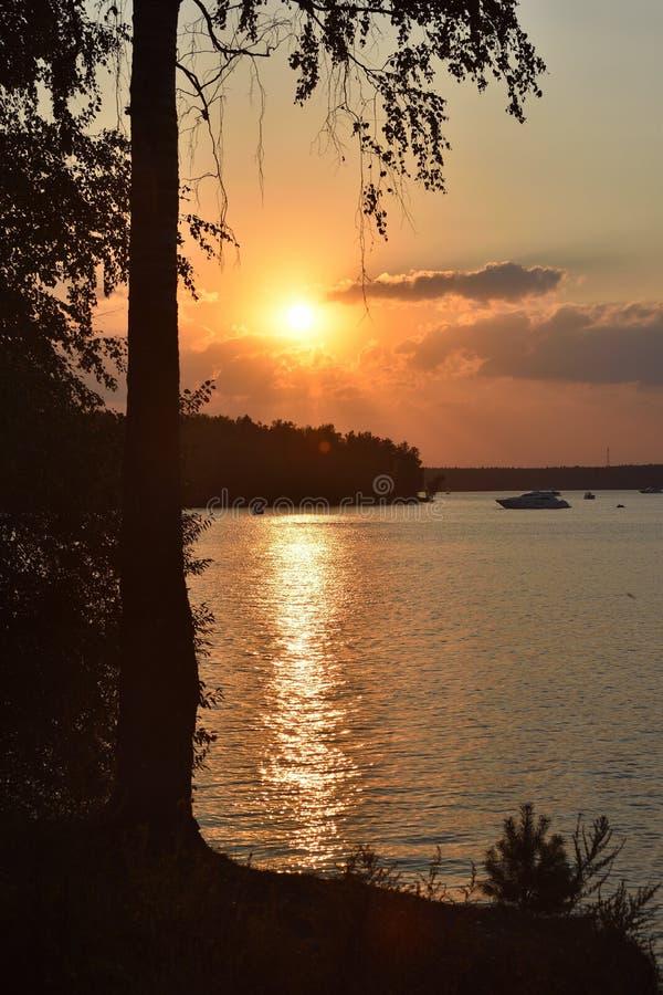 Tramonto sul lago, siluetta di una betulla su un backgroun di tramonto fotografia stock libera da diritti