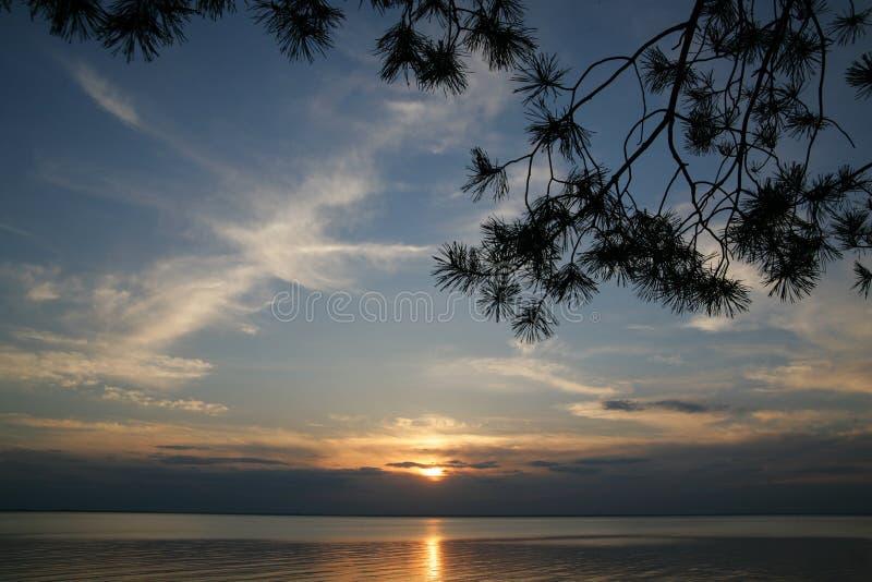 Tramonto sul mare con i rami del pino fotografia stock