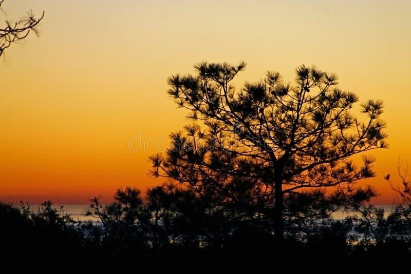 Tramonto, Torrey Pines State Park, California fotografia stock libera da diritti