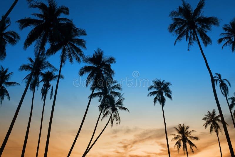 Tramonto tropicale con la palma fotografia stock