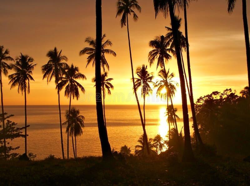 Tramonto tropicale con la siluetta degli alberi. fotografia stock