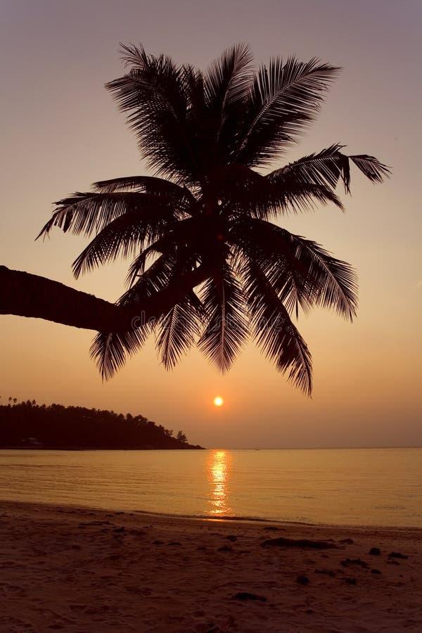 Tramonto tropicale della spiaggia fotografie stock libere da diritti