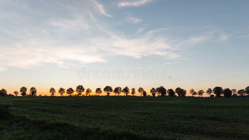 Tramonto in un campo con erba con un cielo nuvoloso e con gli alberi sull'orizzonte Bello tramonto arancio-rosa di estate paesagg immagini stock