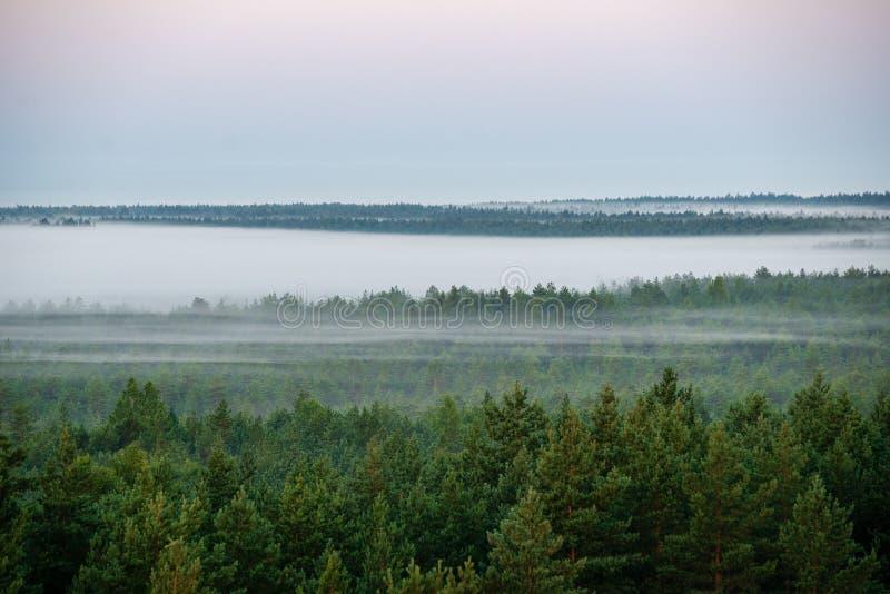 tramonto variopinto di alba nel prato nebbioso di estate immagine stock libera da diritti