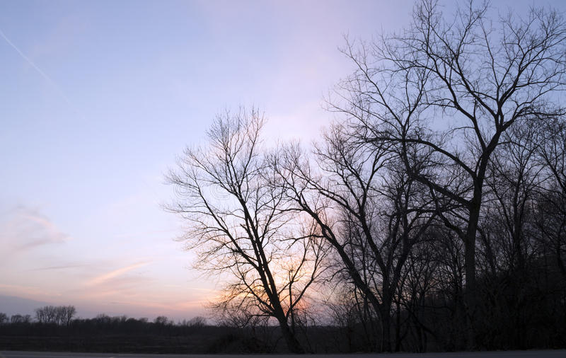 Tramonto variopinto ed alberi immagine stock