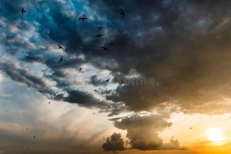Tramonto variopinto luminoso, toni blu e rossi gialli con gli uccelli immagine stock