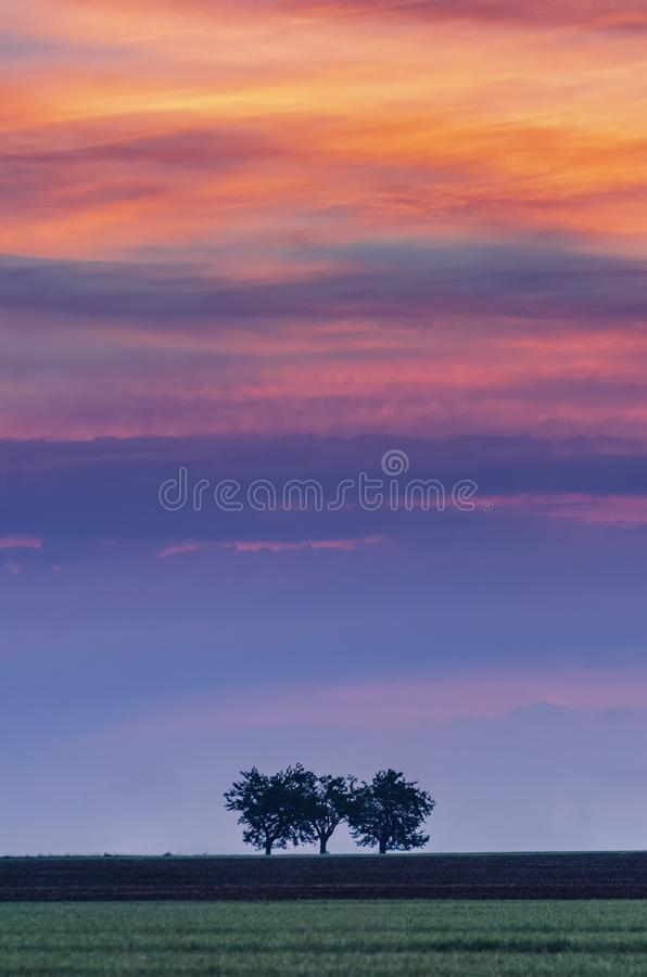 Tramonto vibrante ed alberi soli fotografia stock
