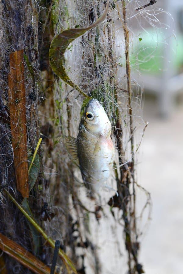 Trampas de los pescados de la malla imagen de archivo libre de regalías