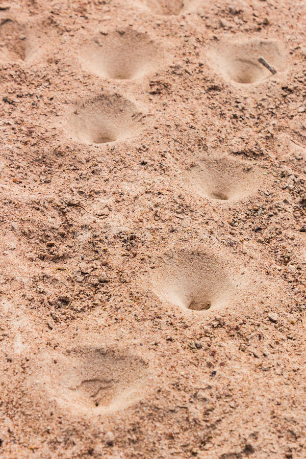 Trampas del hoyo de arena foto de archivo
