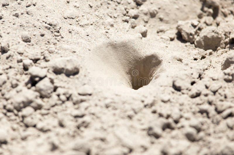 Trampas del insecto en la arena fotos de archivo