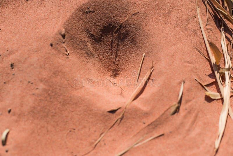 Trampas del insecto en la arena foto de archivo libre de regalías