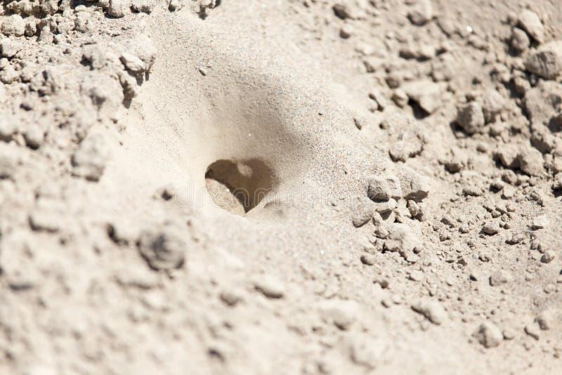Trampas del insecto en la arena imágenes de archivo libres de regalías