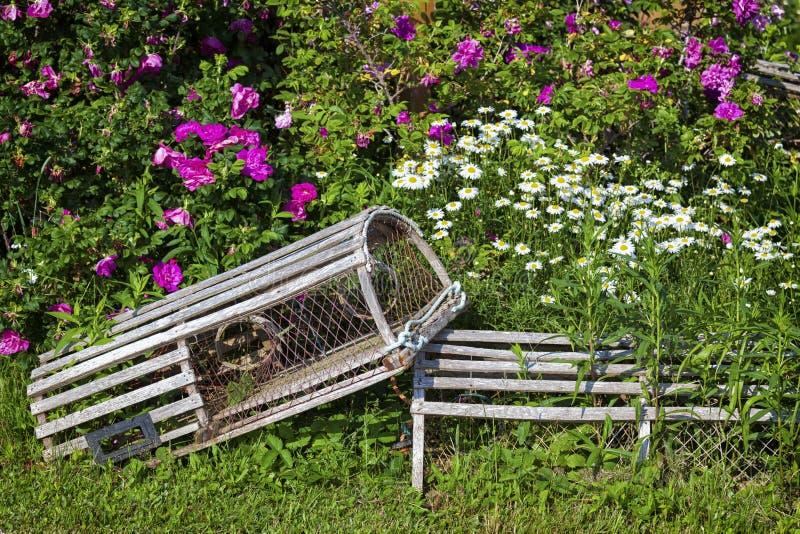 Trampas florales de la langosta imagen de archivo